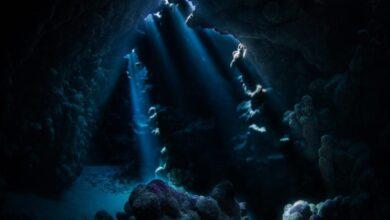 صورة اكتشاف مستعمرة مرجانية ضخمة في جزيرة الوقادي بالمملكة العربية السعودية